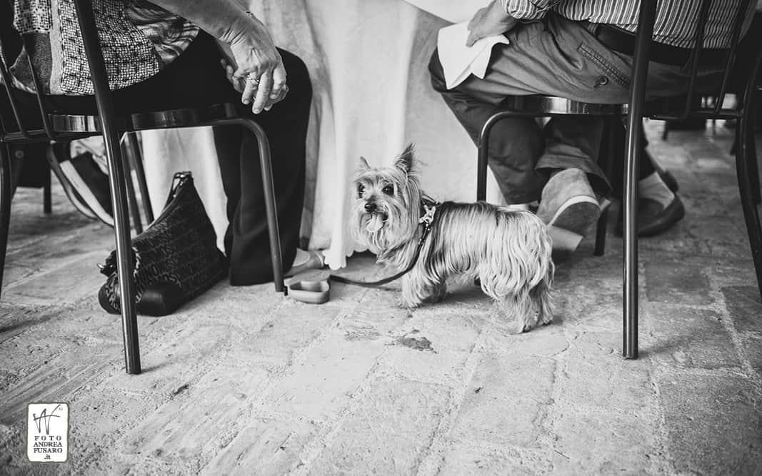 55 villa borgatti ricevimento matrimonio fotografo Matrimonio Manuela e Andrea from London to Italy