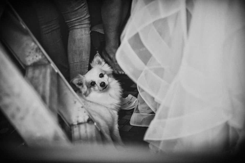 01a cane preparativi sposa Erika + Davide | Rovigo   Padova