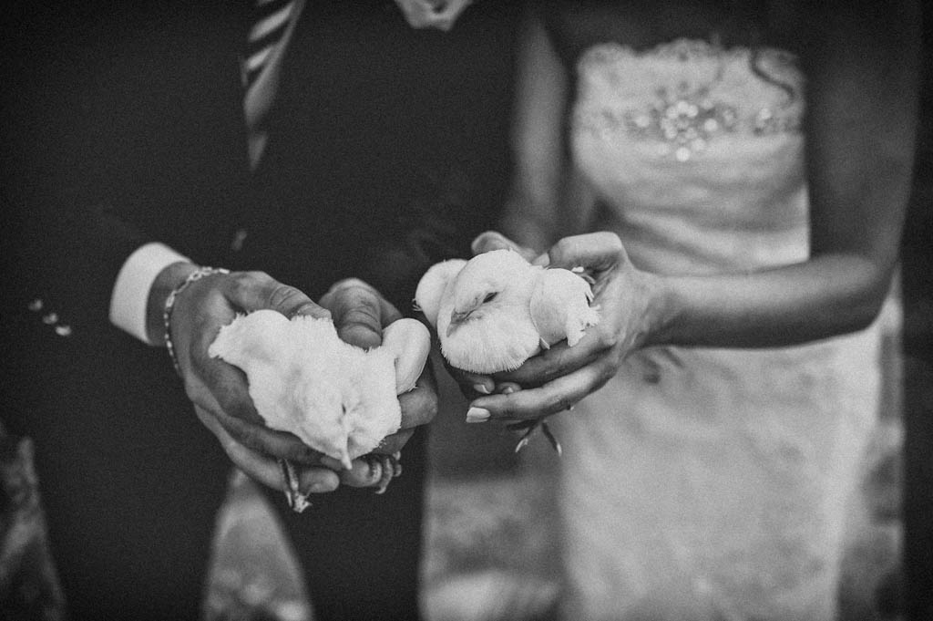 24 colmbe matrimonio rovigo