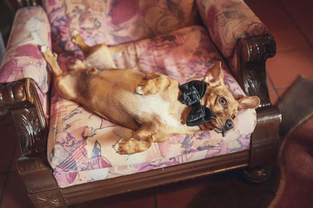 06 cane matrimonio papillon Monica + Niccolò | matrimonio padova, colli euganei