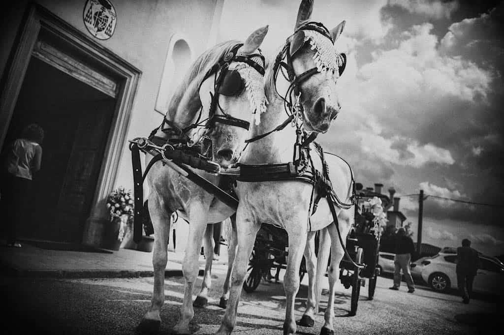 09 carrozza cavalli matrimonio nozze Monica + Niccolò | matrimonio padova, colli euganei
