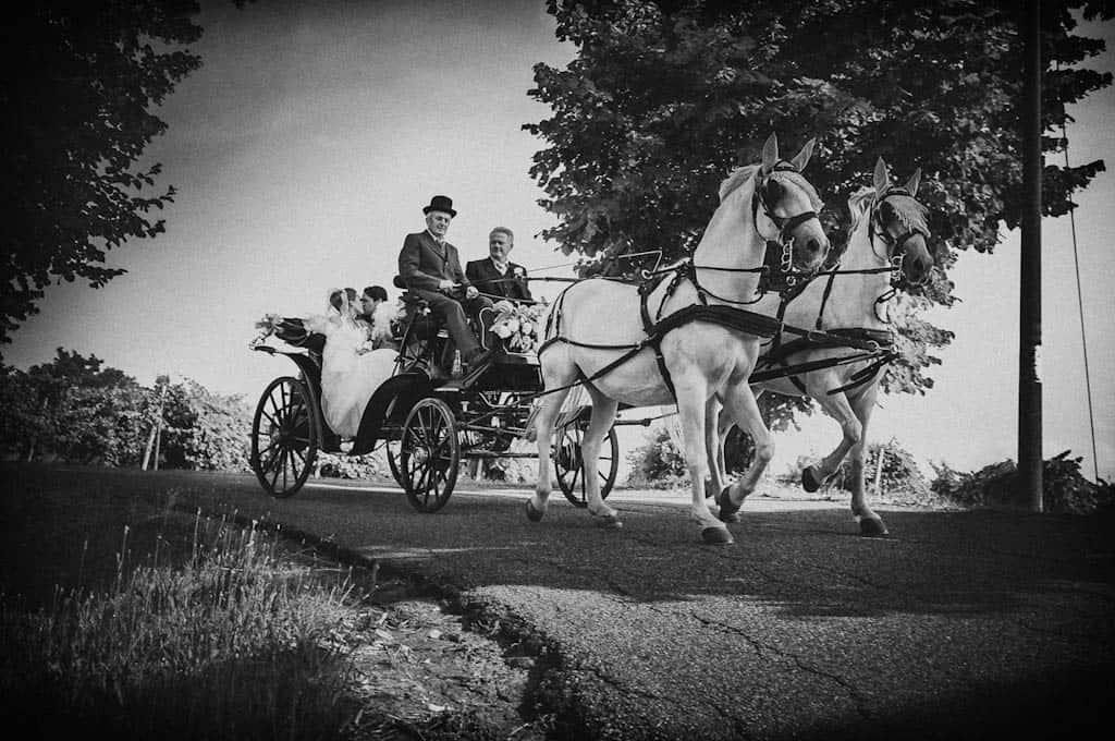 24 carrozza cavalli matrimonio padova