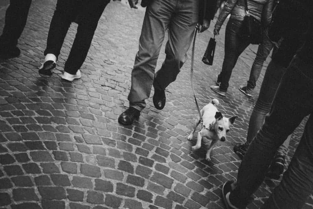 27 cane per al guinzaglio passanti Alessandra e Michel: fidanzati a torino
