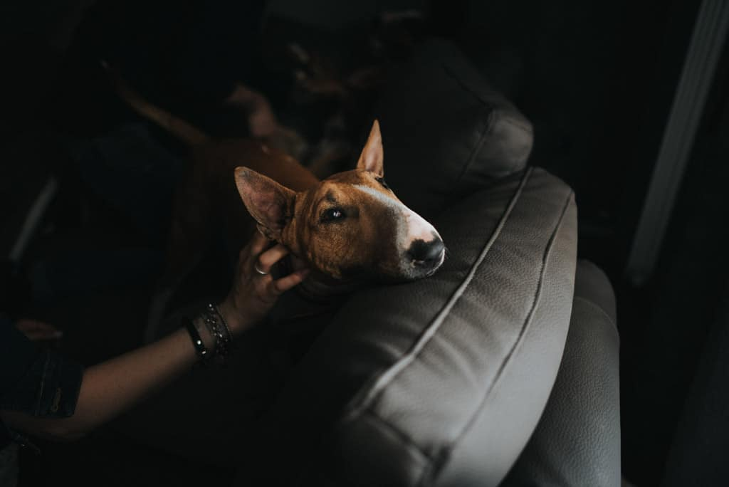 249 fotografo ritratti animali da compagnia Servizio fotografico per fidanzati   Hipster Rock, Tatuaggi e Bull Terrier