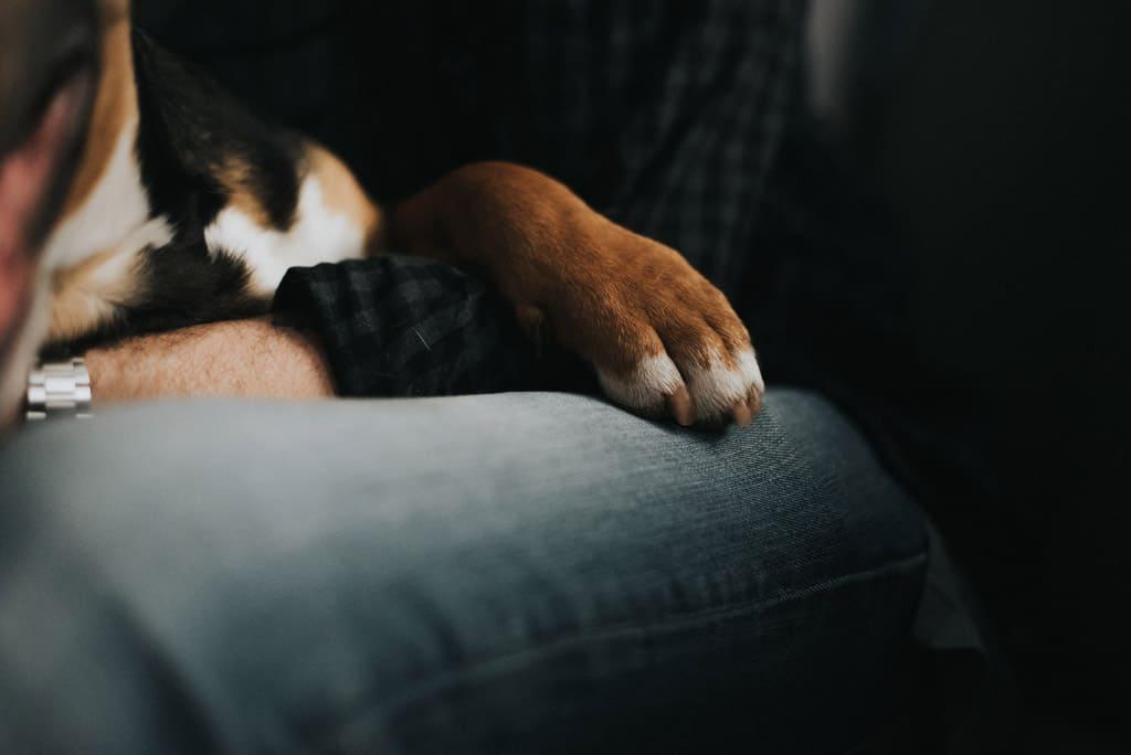 251 fotografo cani Servizio fotografico per fidanzati   Hipster Rock, Tatuaggi e Bull Terrier
